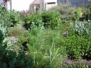 jardin botanique aneth