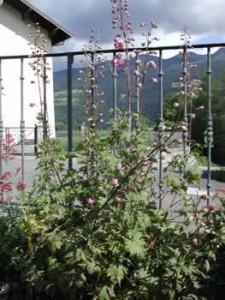 jardin botanique delphinium